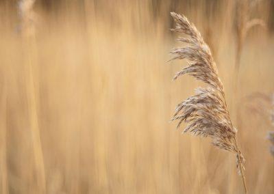 Grange Farm Photography